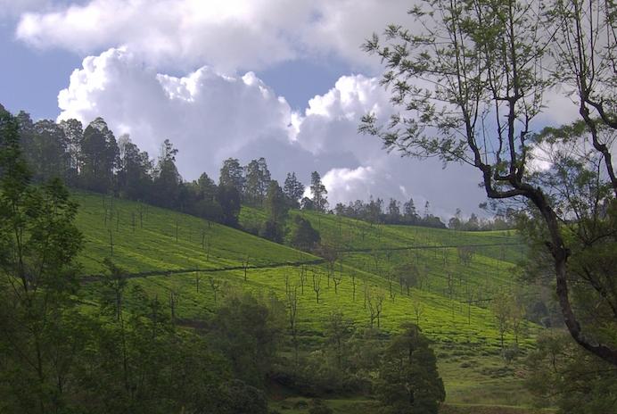 Plantation de thé de Karakundah Inde