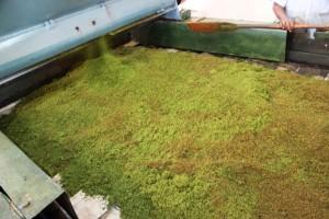 Tapis de fermentation du thé