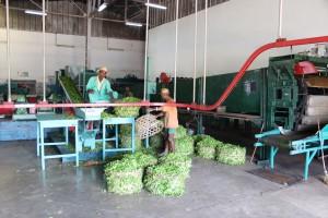 Unité de production de thé
