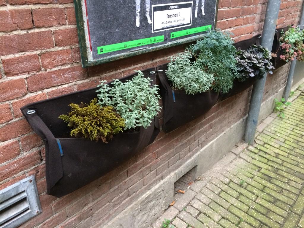 sac contenant es plantes accrochés à un mur
