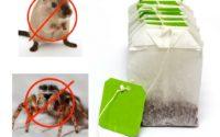 Un sachet de thé pour vous débarrasser des souris et araignées
