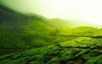 Les bienfaits du thé vert : liste complète et études scientifiques