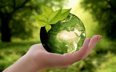 3 solutions géniales pour remplacer le plastique alimentaire