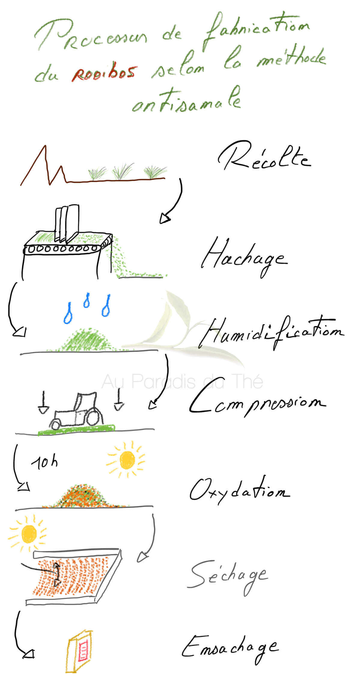 croquis des étapes de fabrication du rooibos