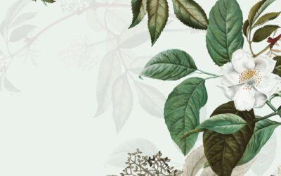Le thé vert au jasmin en 5 questions