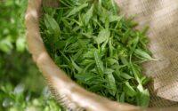Bien choisir son thé vert nature en 4 questions